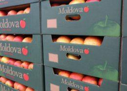 moldova-export-fructe-260x188.jpg