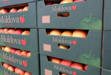 moldova-export-fructe-370x251.jpg